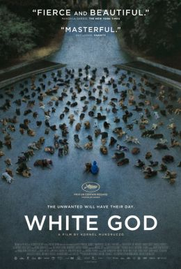 White God HD Trailer