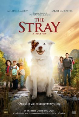The Stray HD Trailer