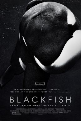 Blackfish HD Trailer